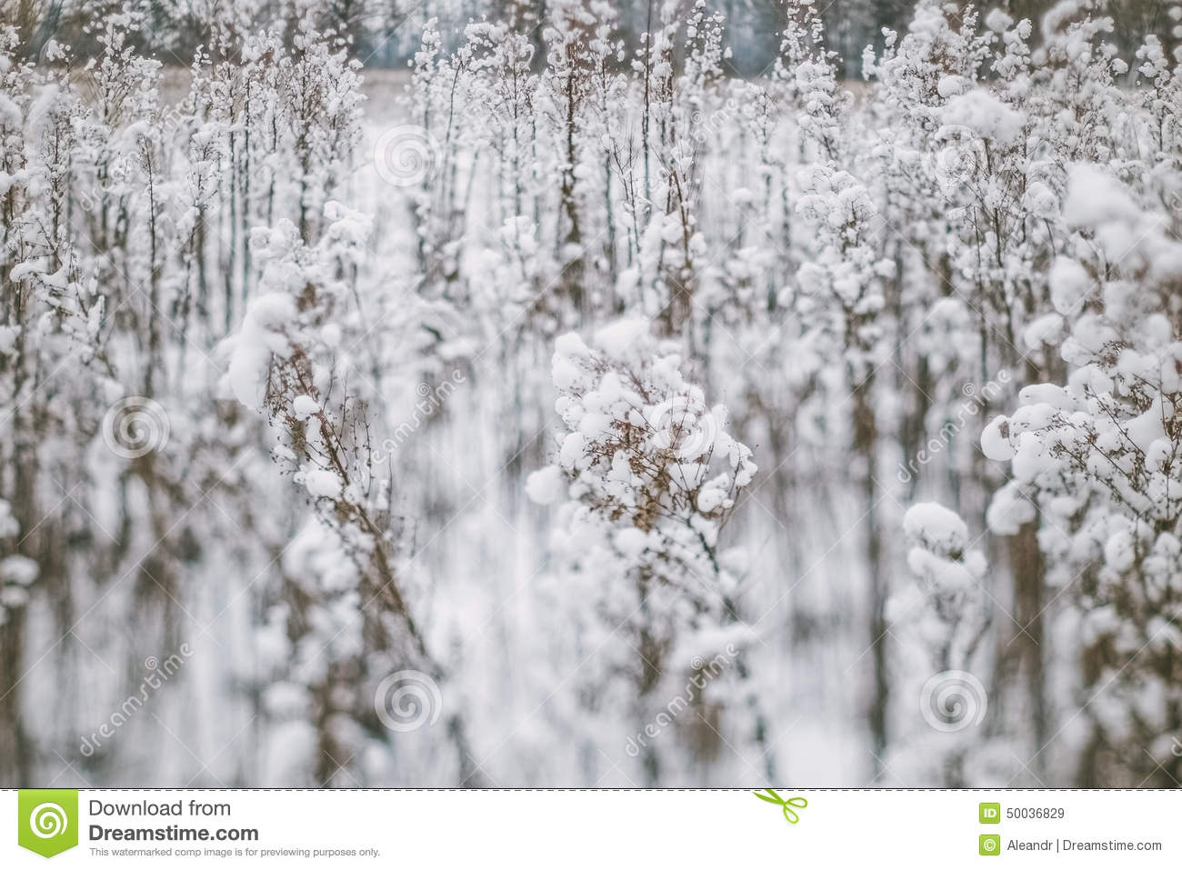 Winter Landscape With Snow Covered Plants And Trees Small Depth Of