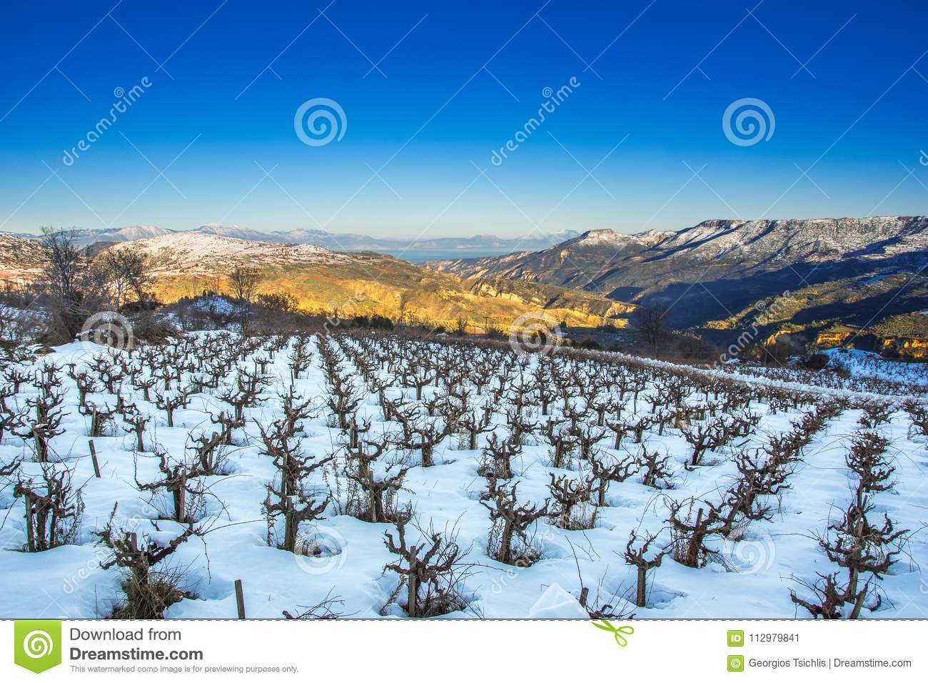 Winter landscape with snow, with a field of grapevines and clear blue sky, Trikala Korinthias.
