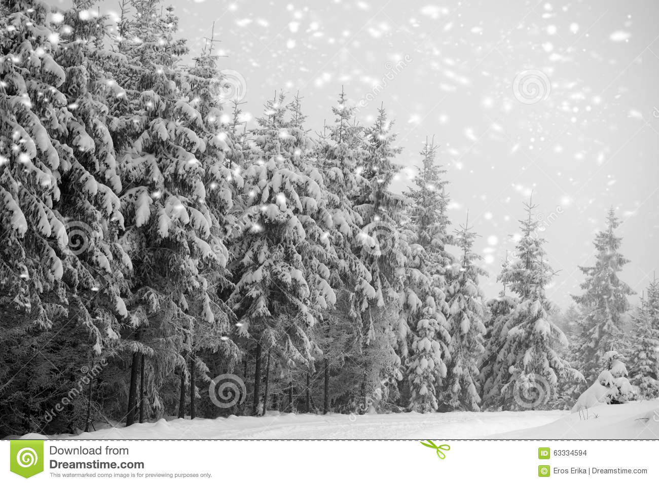 snowy fir trees forest - photo #26