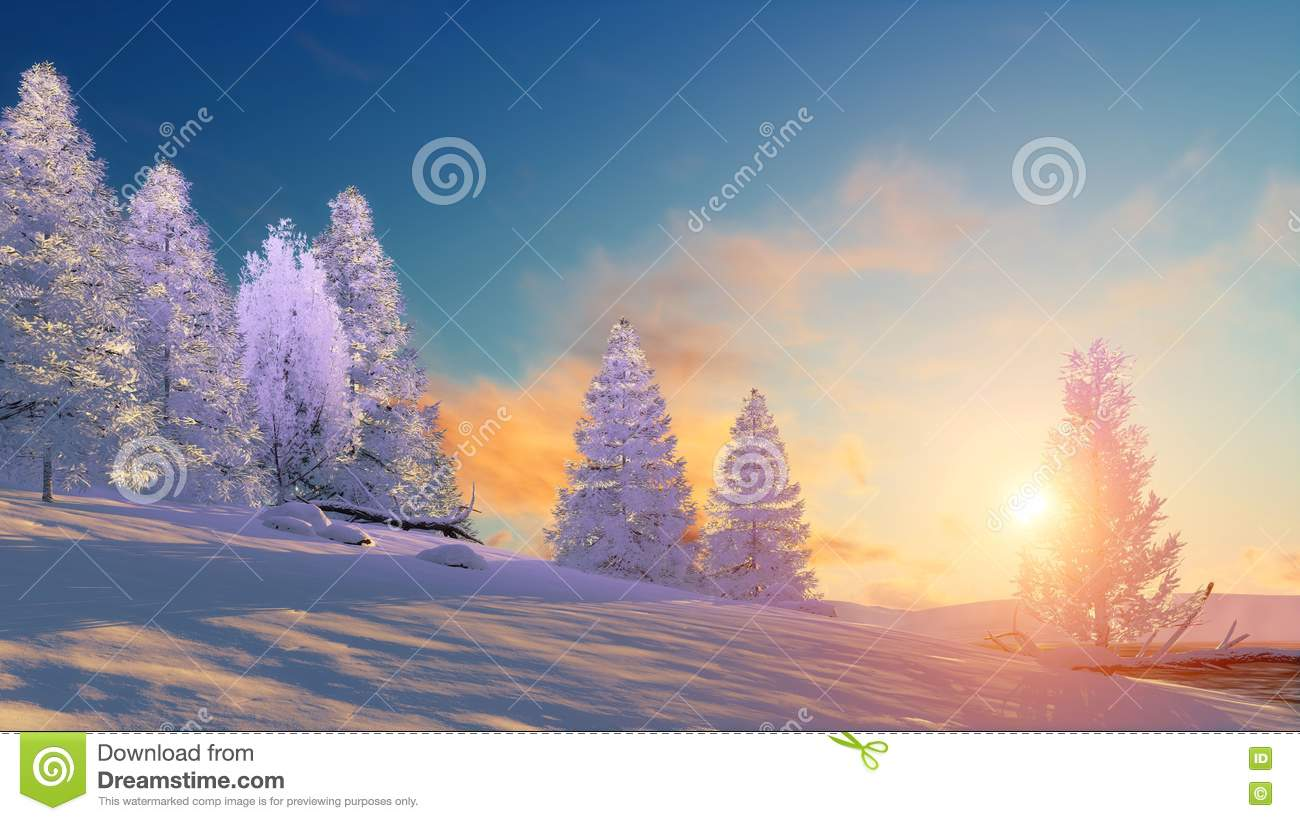 Winter landscape with snowy firs at sunset