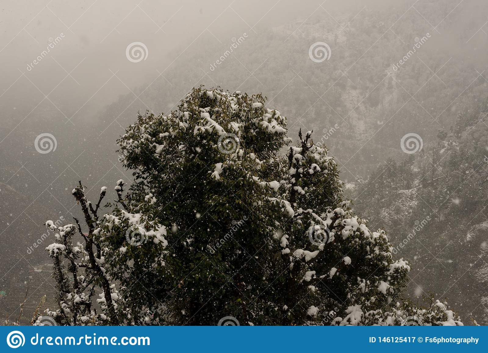 Winter landscape. Tree and dry grass plants in the snow. Snow caped mountain range in blurred background