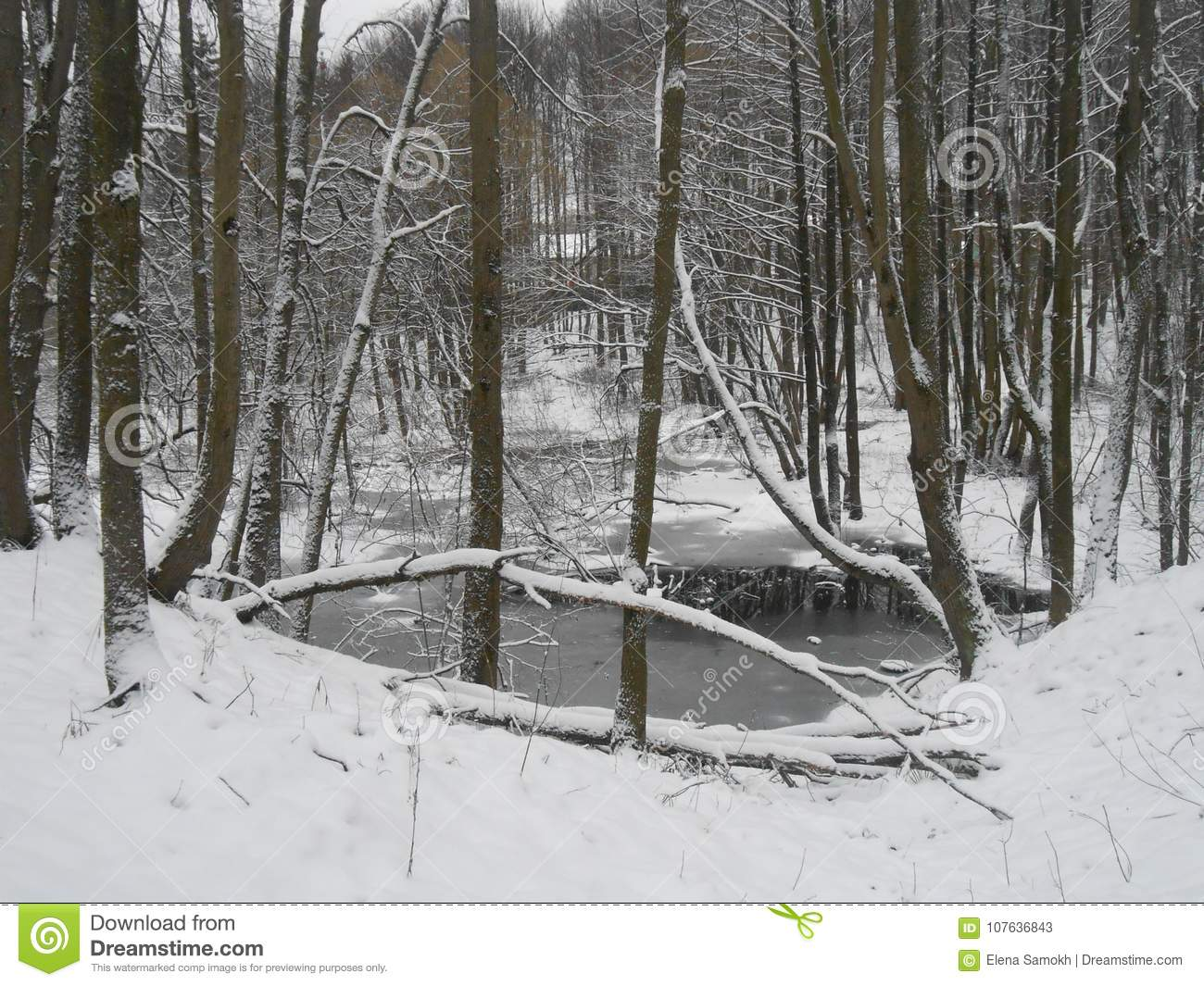 Winter landscape with trees.