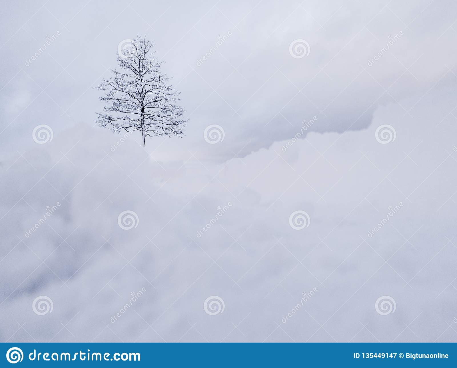 Winter landscape. White snow above tree. Winter panorama landscape with forest trees.