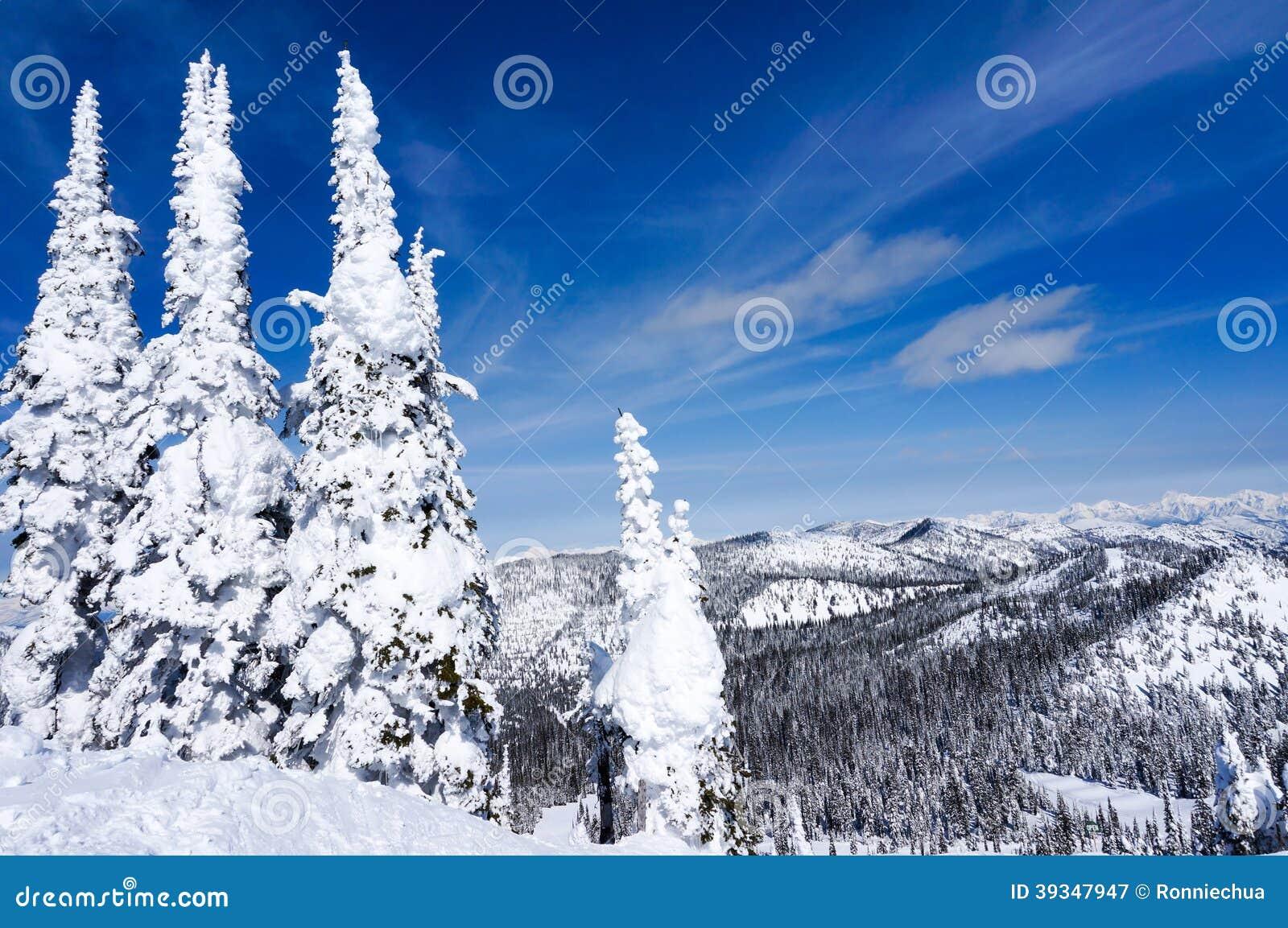 Montana Fir Christmas Tree