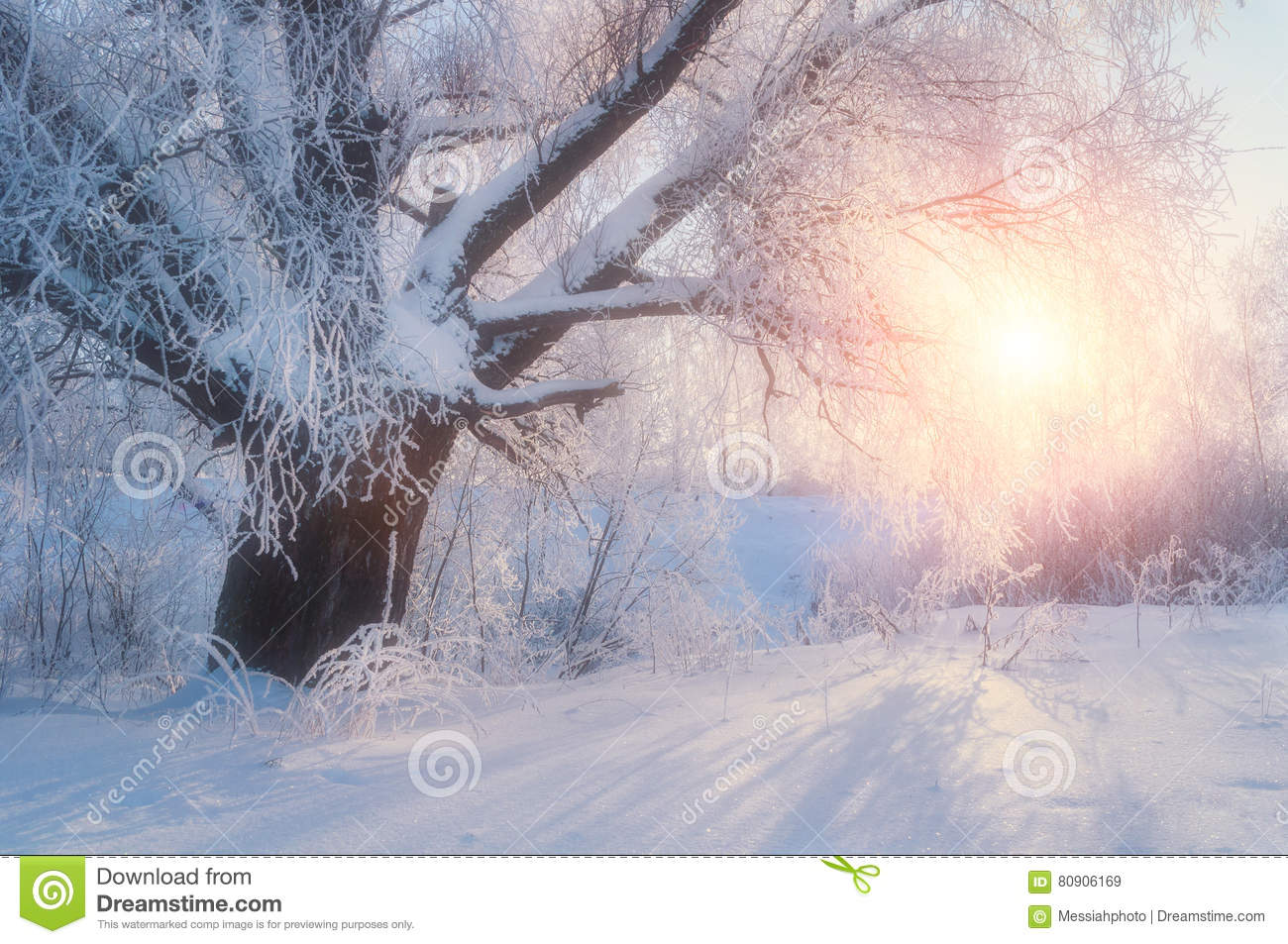 Winter landscape-winter tree in the sunrise forest. Winter landscape wonderland scene