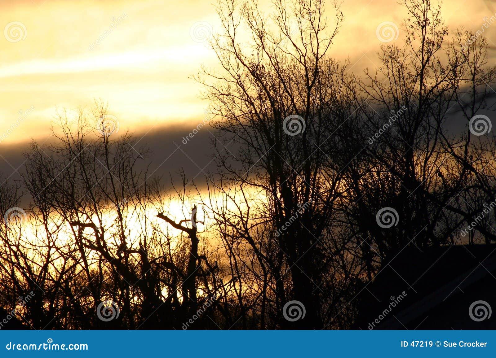 Winter-Morgen