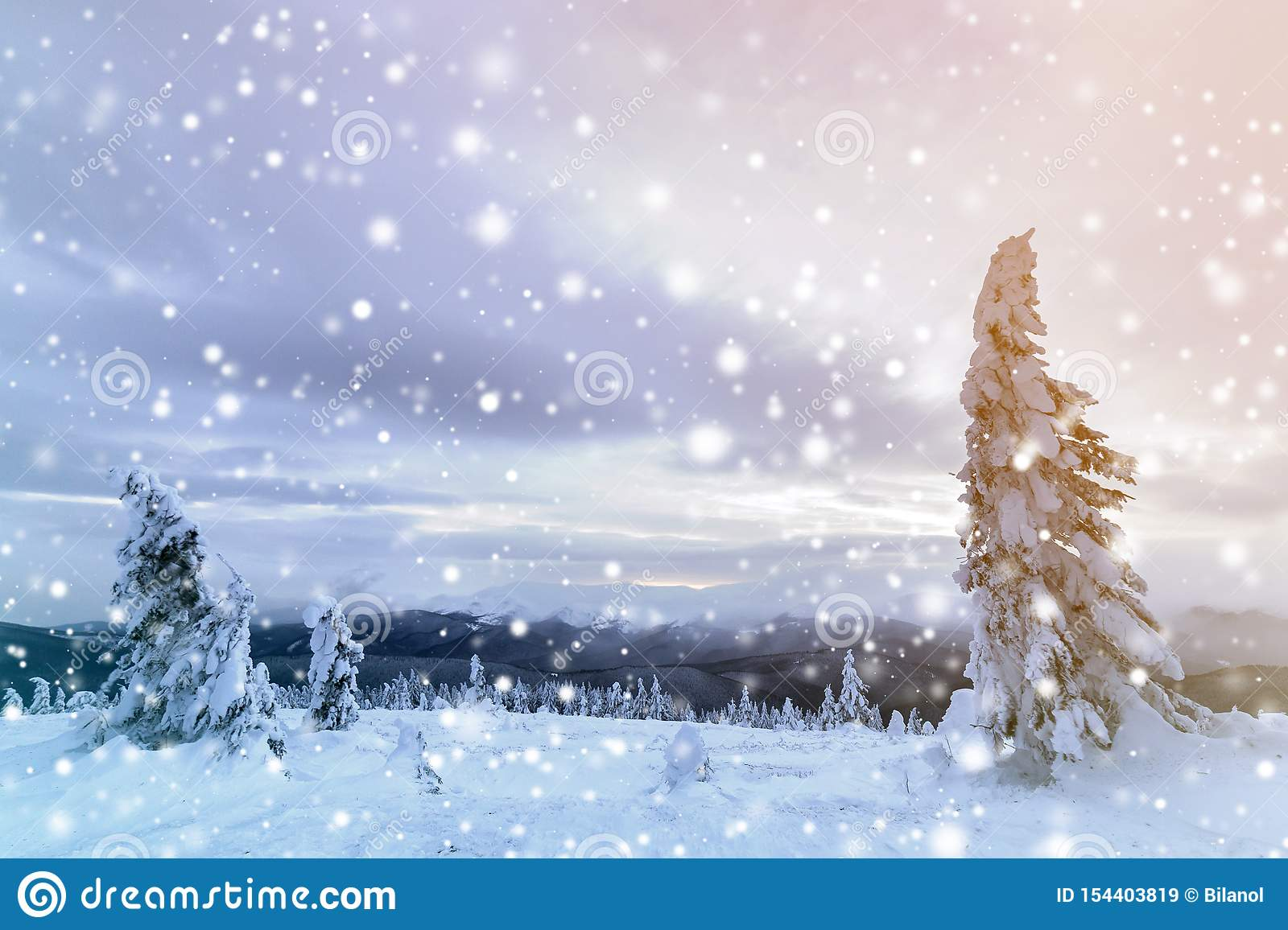 Winter mountain blue landscape. Small spruce trees in deep snow on bright cloudy sky copy space background