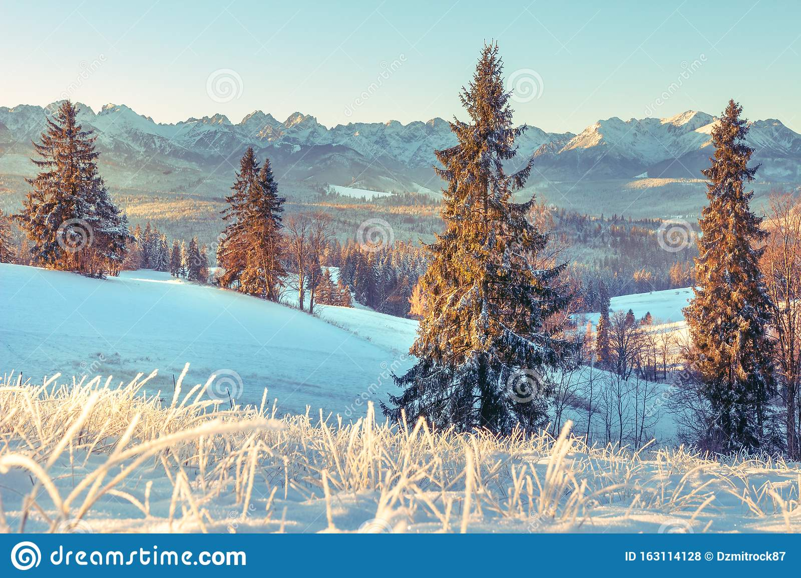 Winter nature in Tatra, Zakopane, Poland. Snowy Christmas trees on mountains valley in sunny morning. Scenery winter