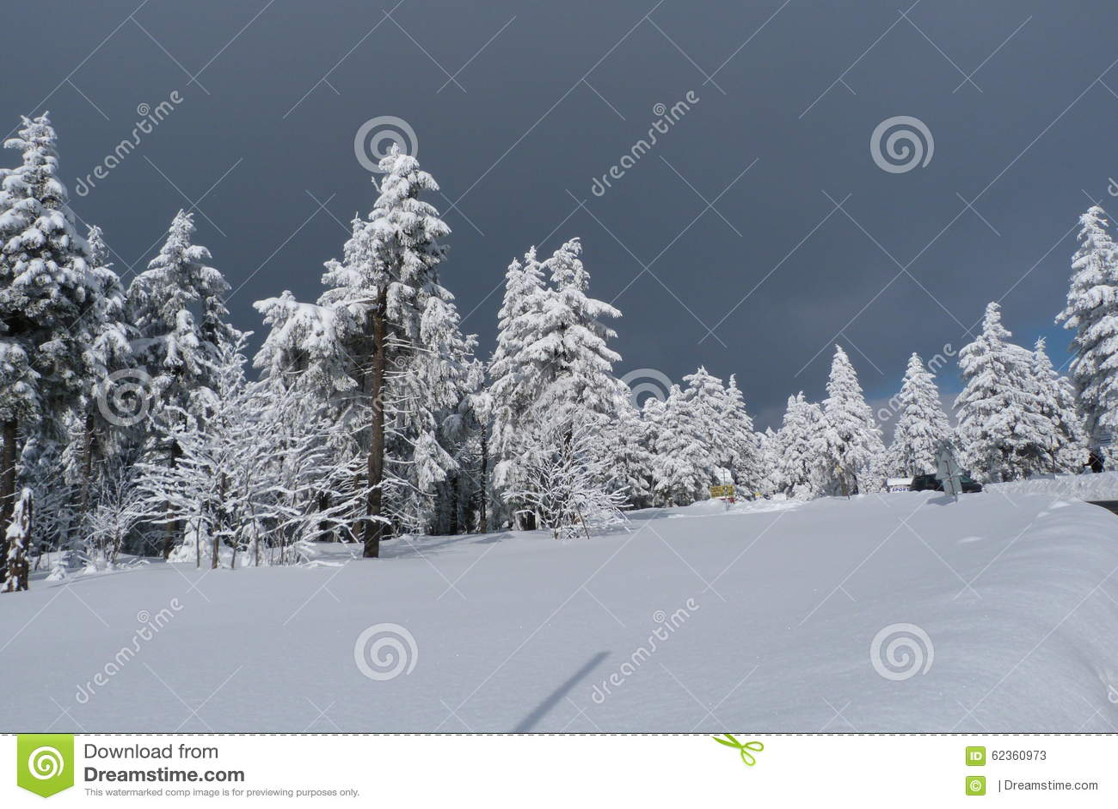 Winter, new year