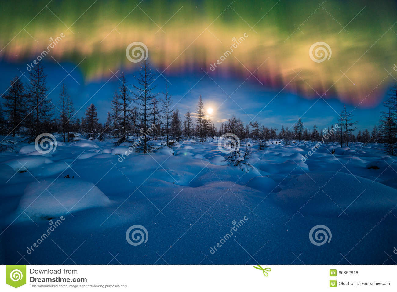 Download Winter Night Landscape With Forest, Moon And Northern Light Over The Forest Stock Photo - Image of light, country: 66852818