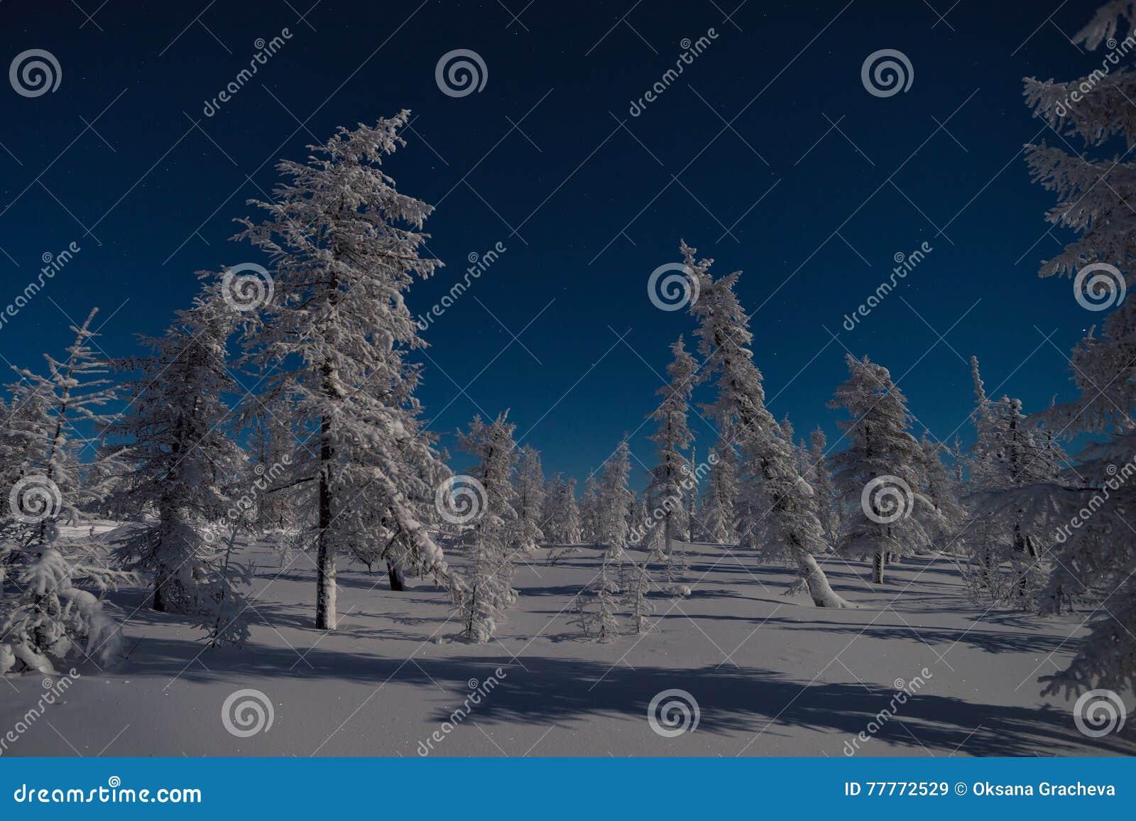winter landscape trees royalty free stock photography cartoondealer