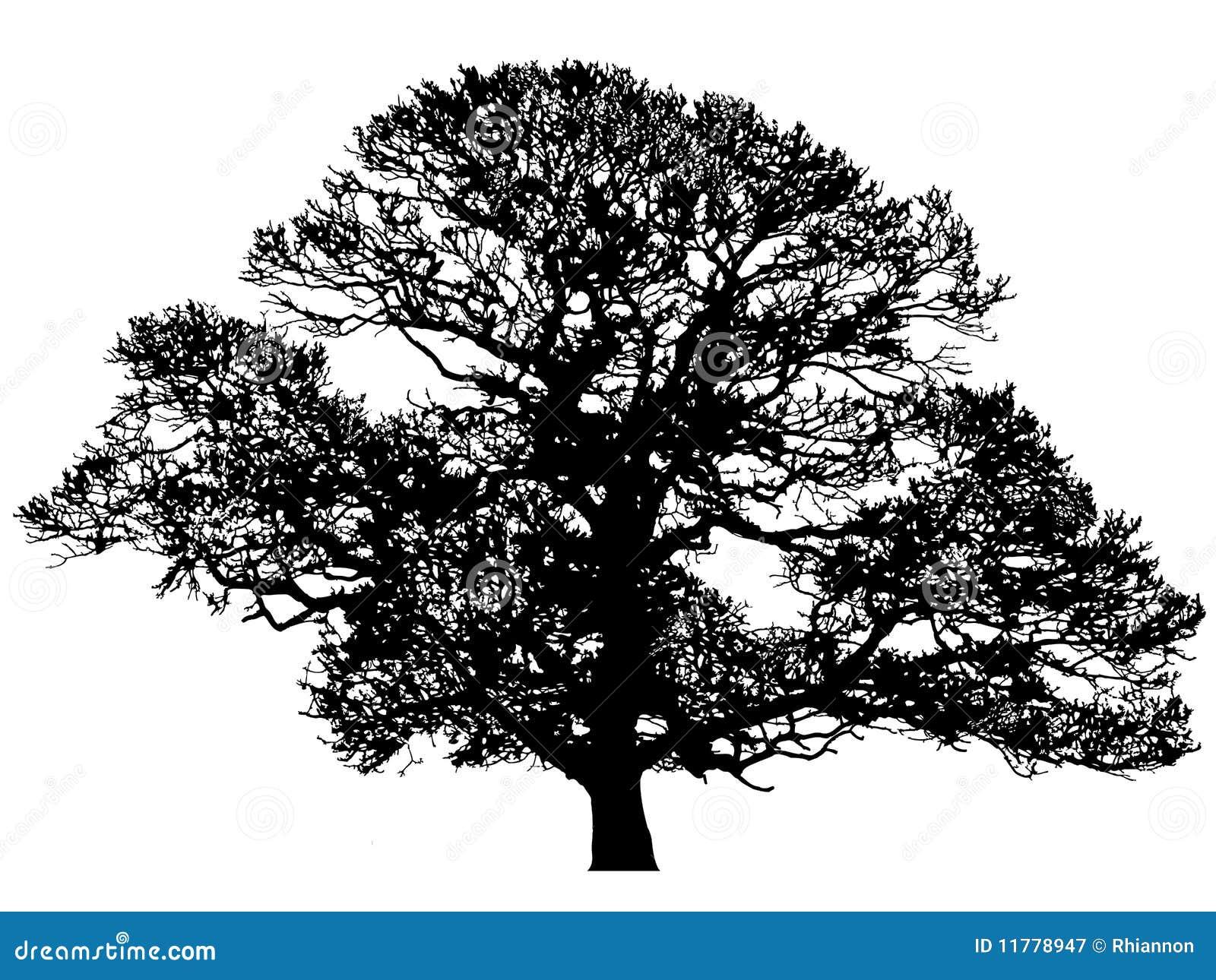Winter Oak Silhouette stock vector. Illustration of ...