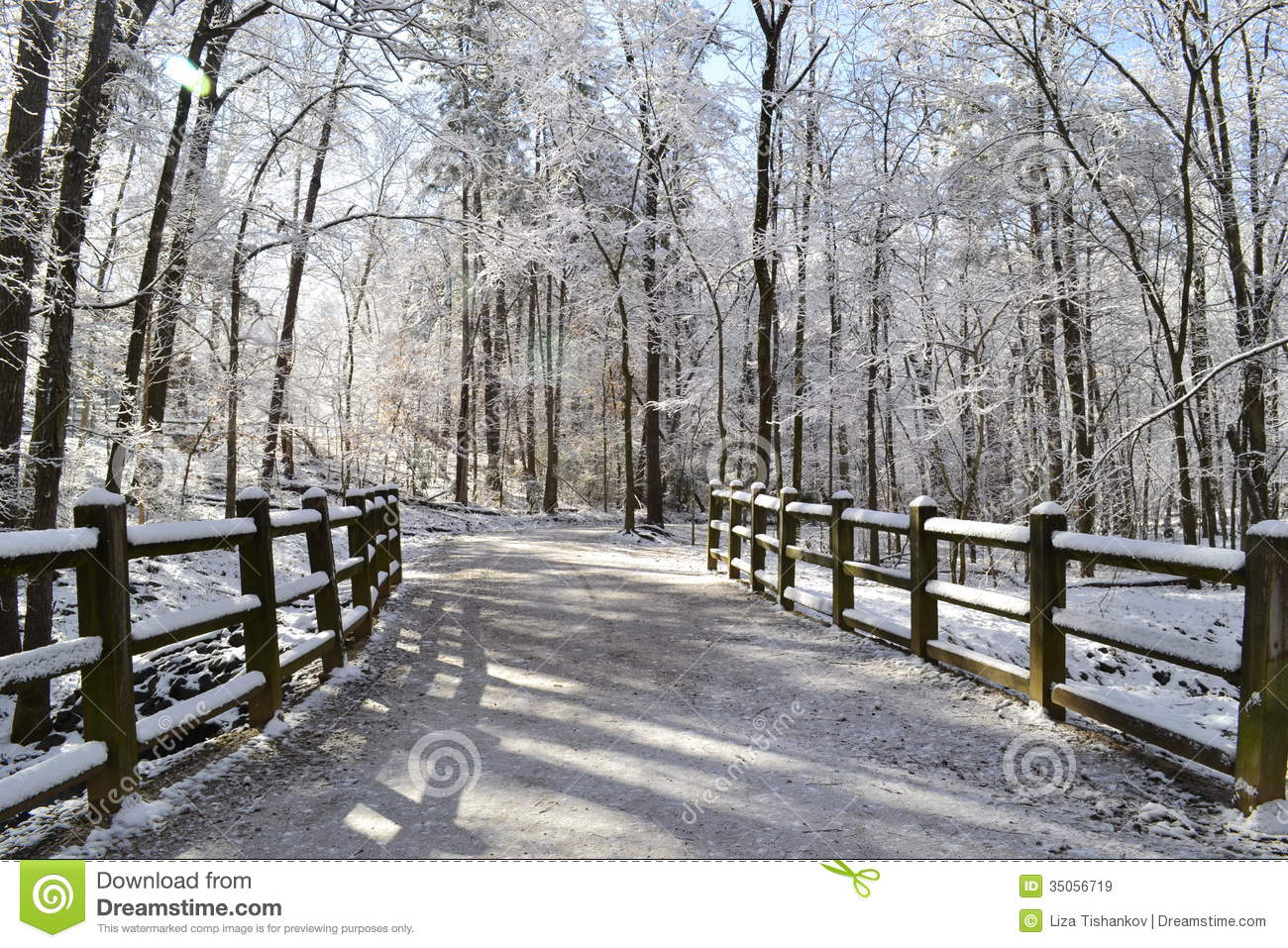 forest corridor with fence - photo #21