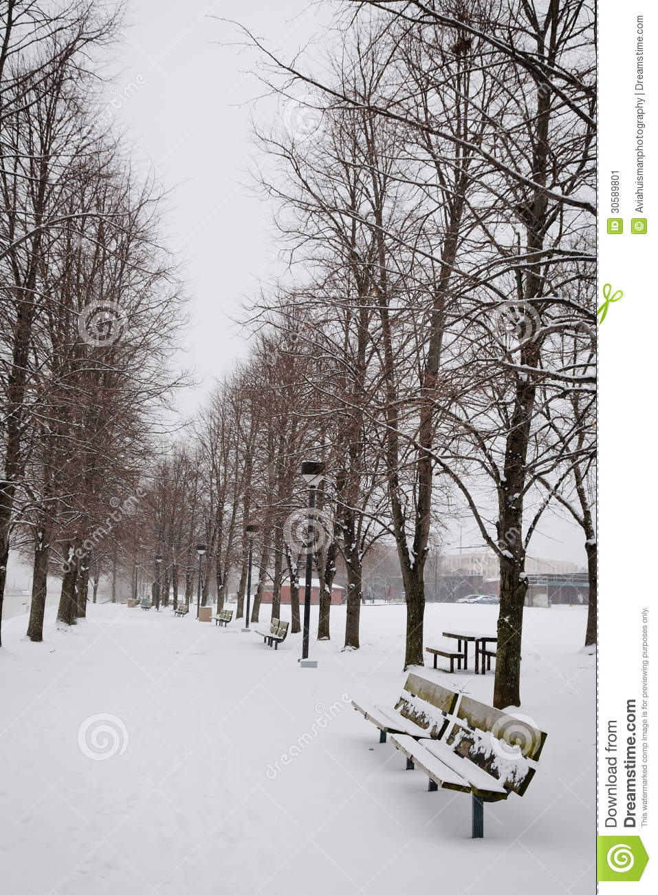 Winter Path in the Park