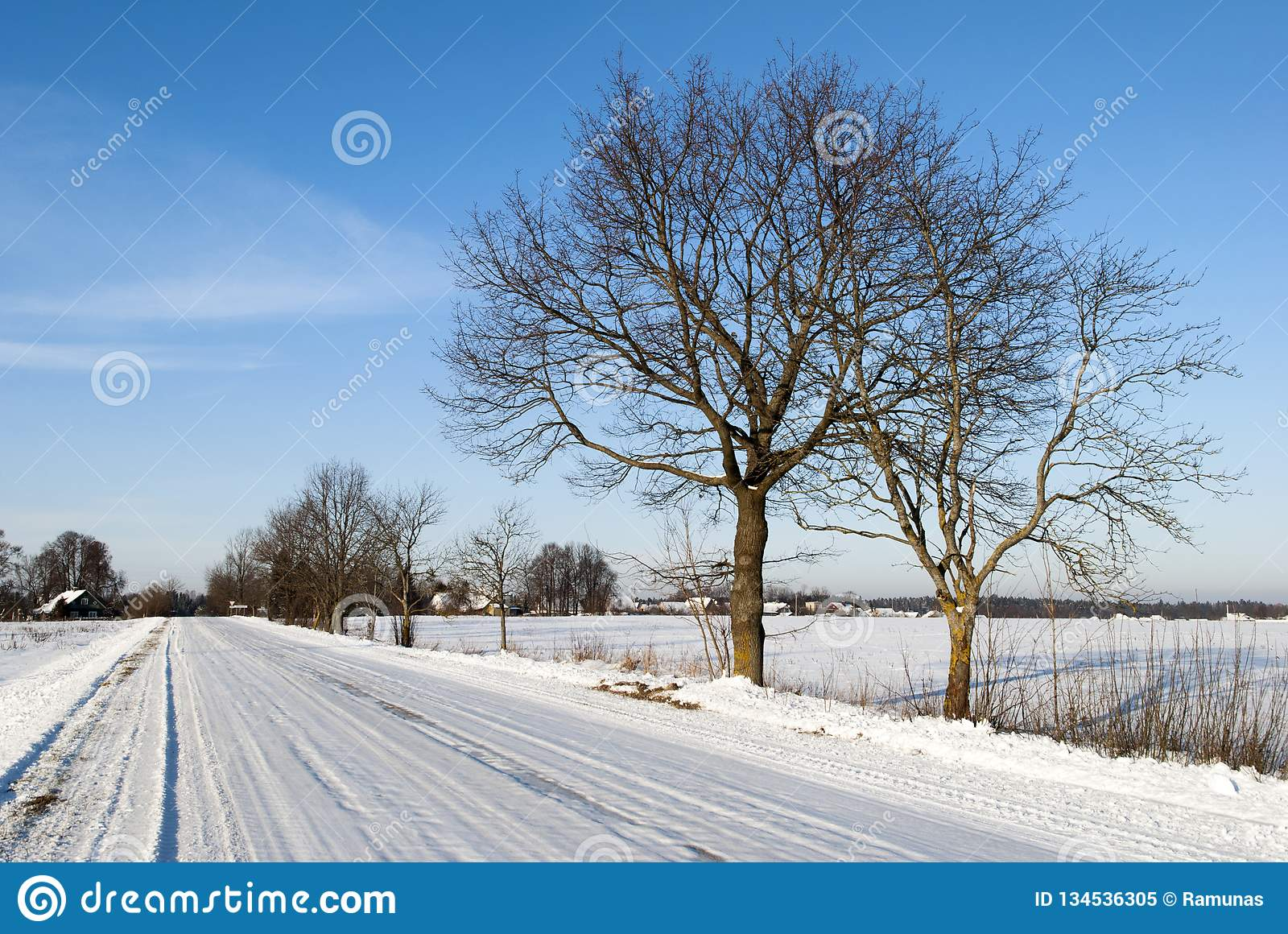Winter Road in Lithuania. The countryside road under the snow on a cold Winter morning Lithuania royalty free stock photo