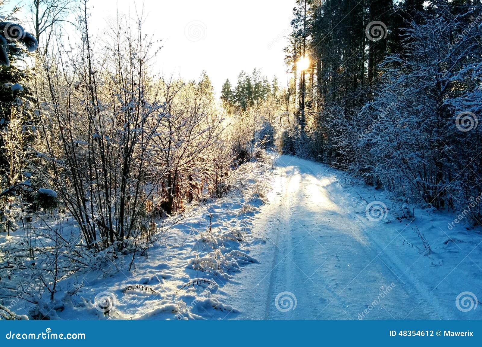 Winter road in sun