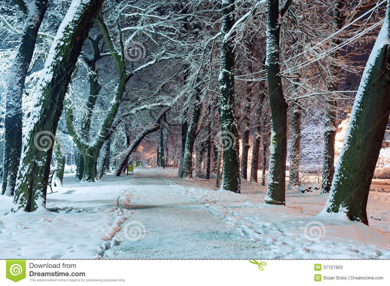 Winter Scene Stock Photos Image 37127903