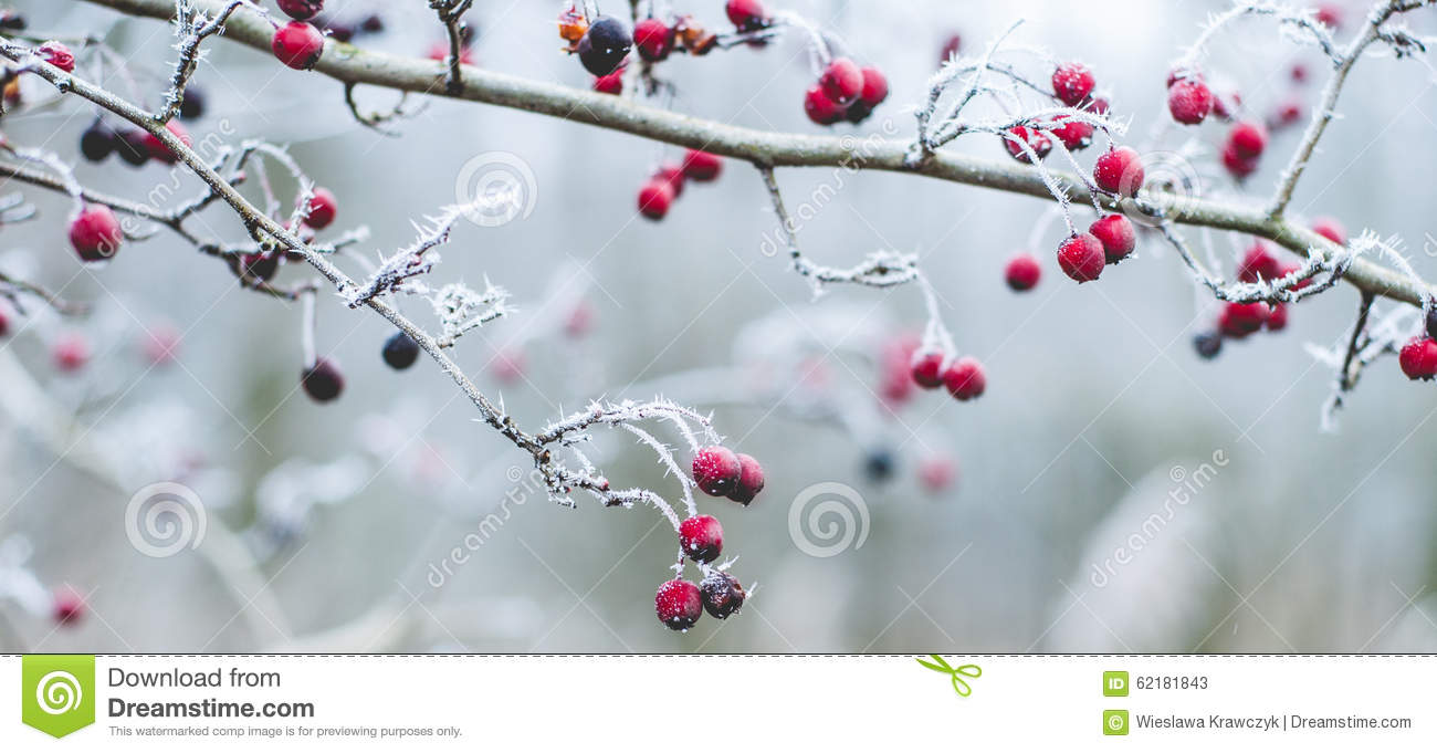 Winter Scene Stock Photo Image 62181843