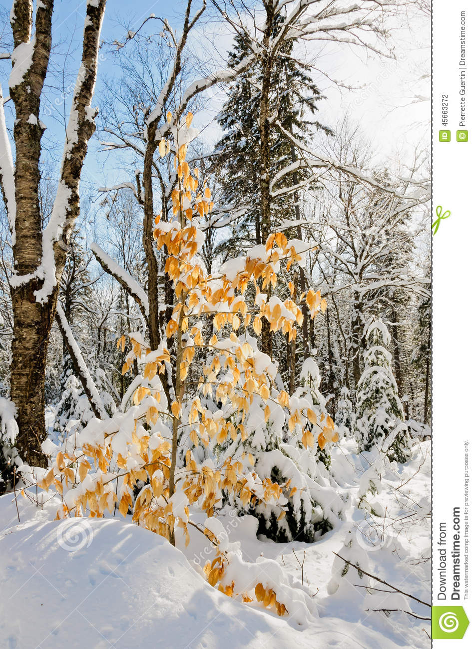 Winter Scenes After Snow Storm Stock Photo - Image of nature, wood
