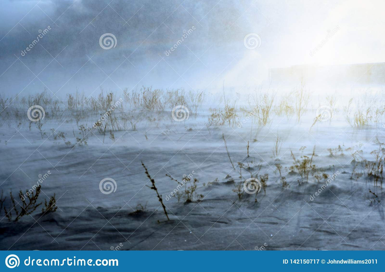 Winter Snow Blizzard With Sun And Plants Stock Image Image Of