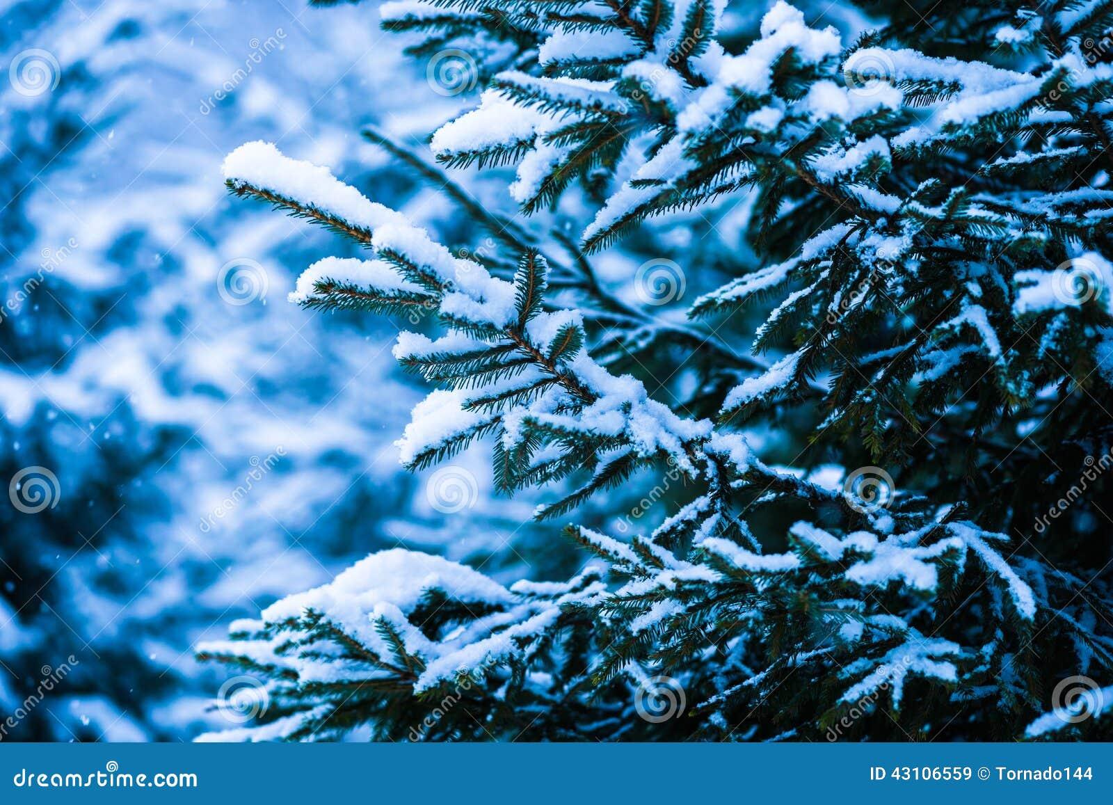 Winter Snow Christmas Tree 9 Stock Photo