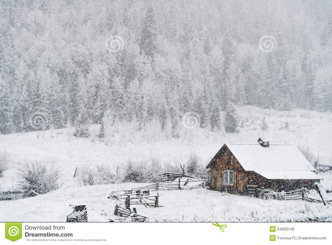 Winter snow falling on log cabin in san isabel national forest