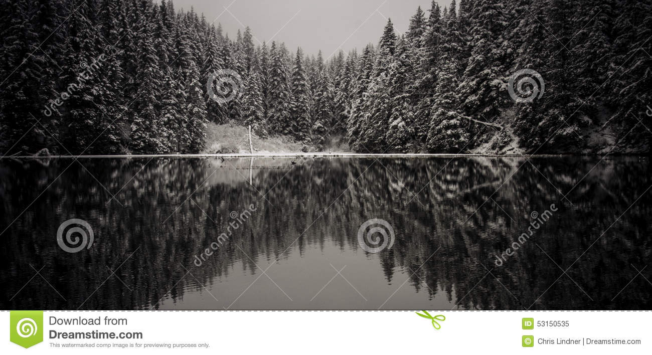 Winter Spruce Reflection