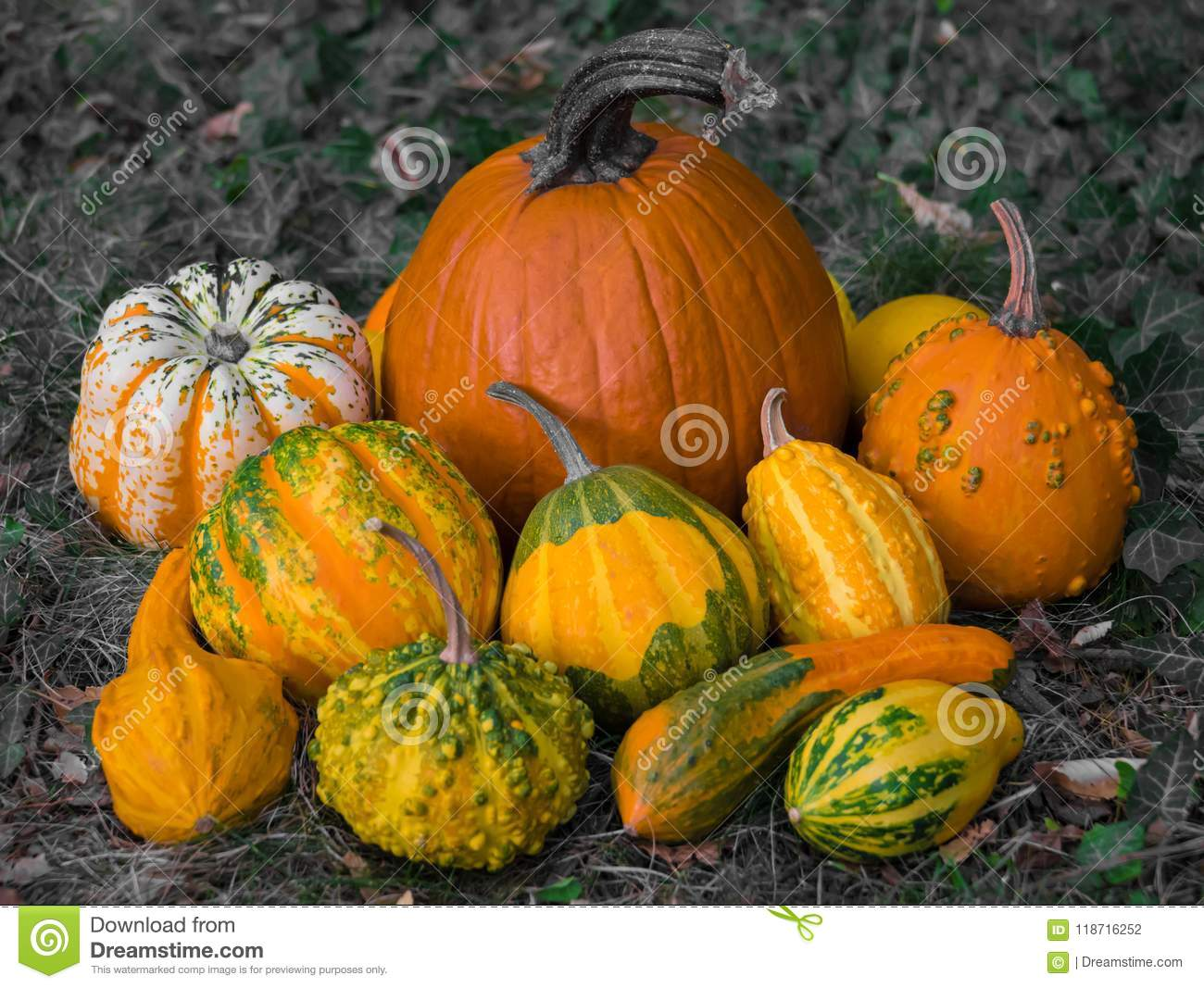 Winter squash with beautiful patterns colored in orange, yellow and green