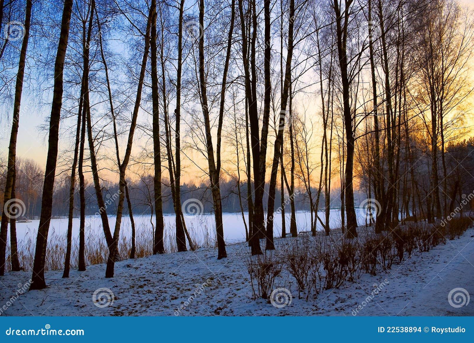 winter sunset landscape snow garden tree view stock
