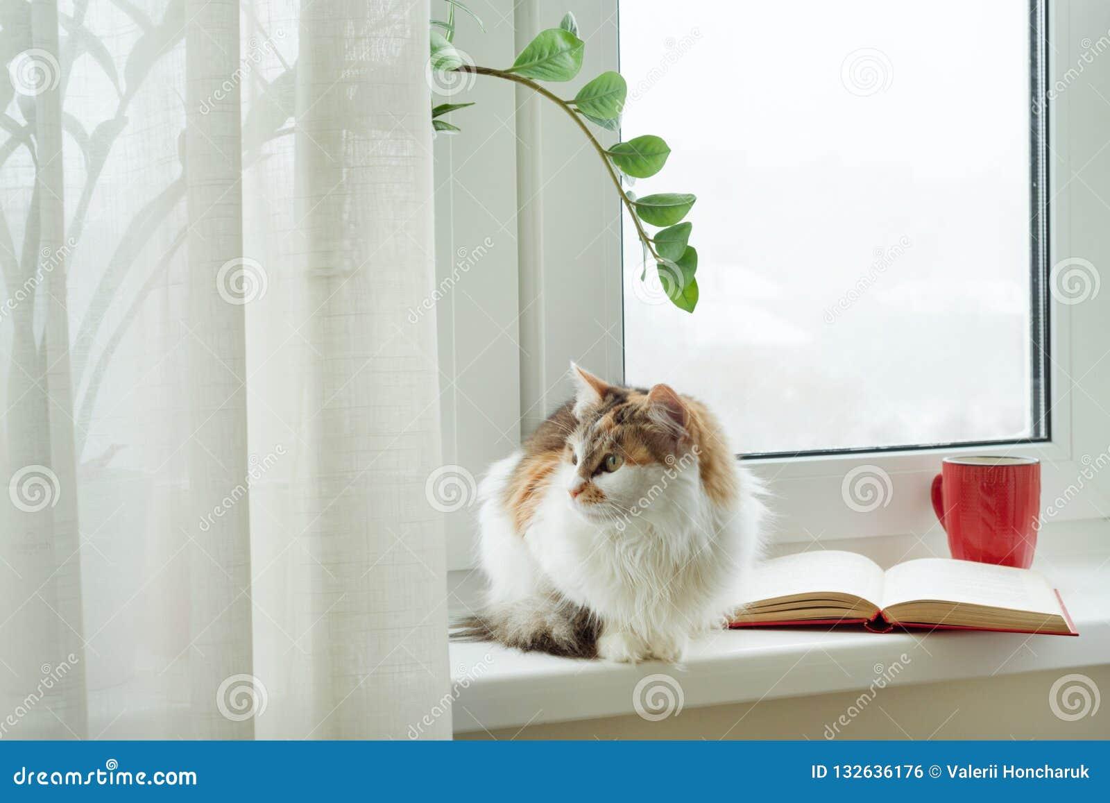 Time Cat Book