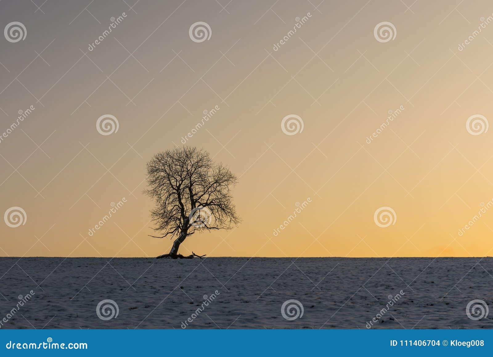 Winter Tree In Benneckenstein In Germany Stock Photo ...