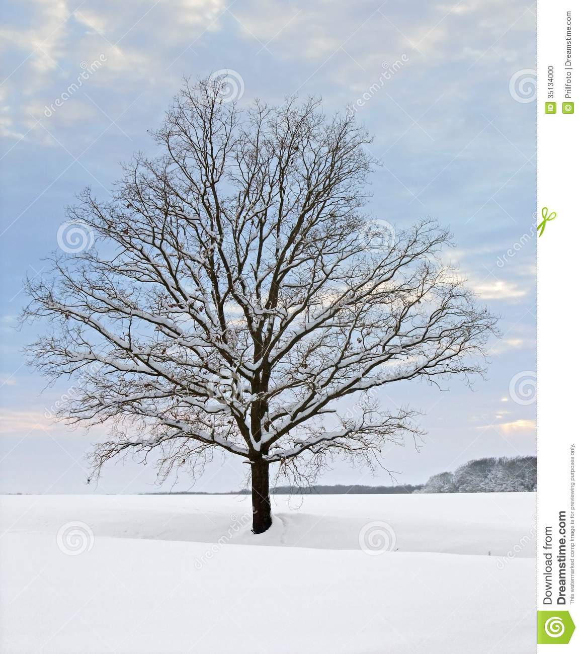 Winter Tree At Evening Time Stock Photo Image 35134000