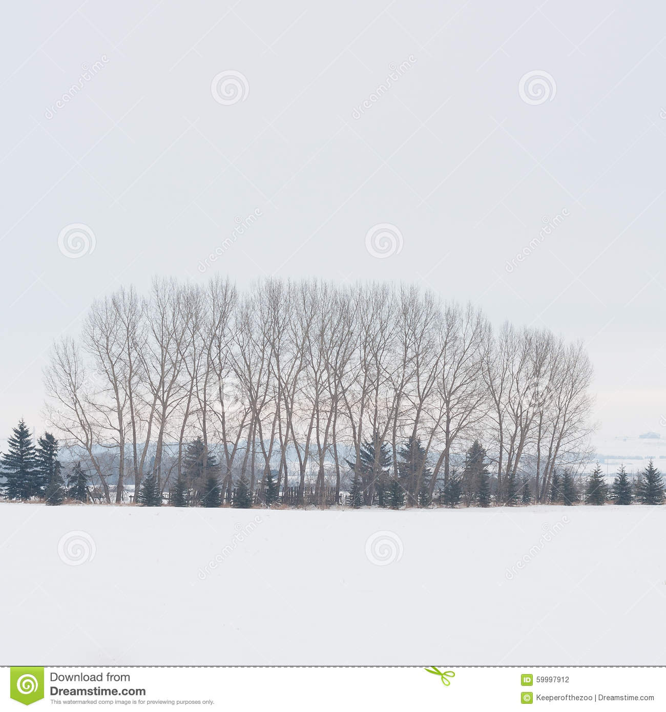 Download Winter Tree Grove stock photo. Image of plants, nature - 59997912