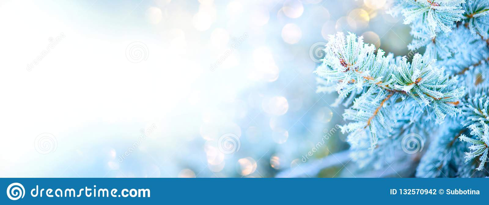 Winter tree holiday snow background. Blue spruce, Christmas and New Year tree border art design, abstract blue backdrop