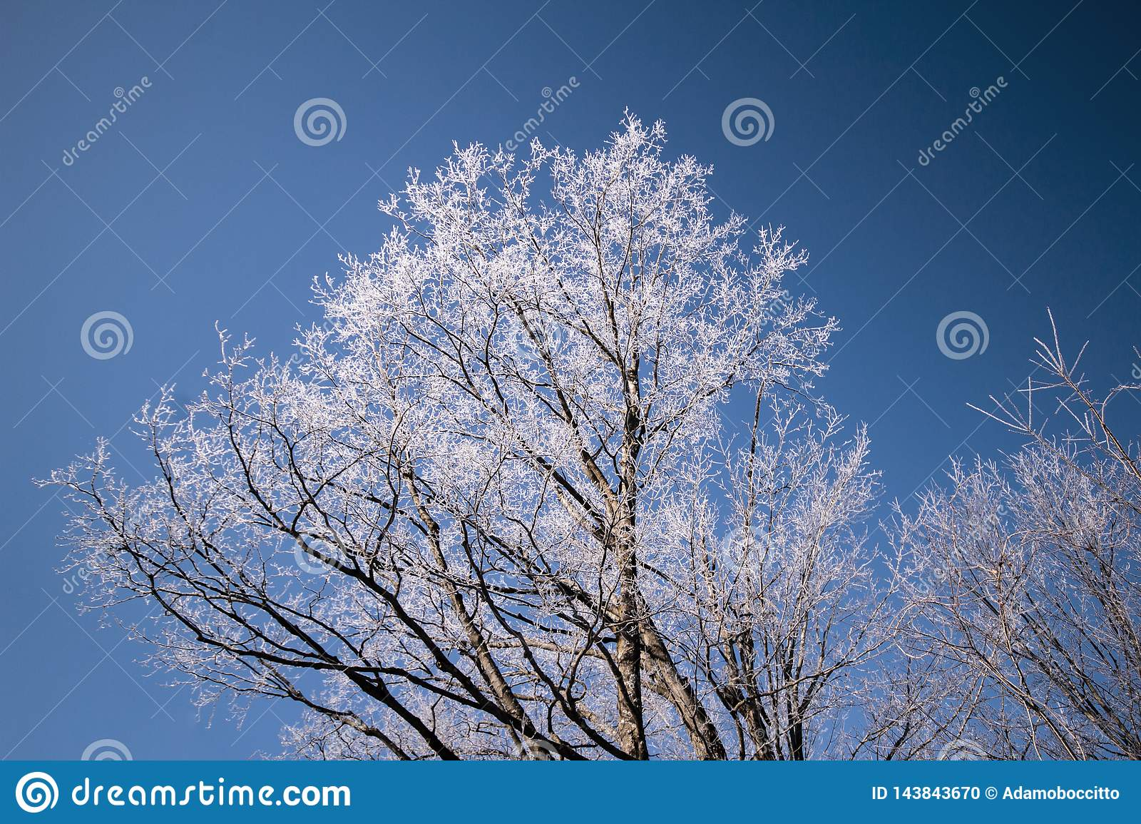 A winter tree with its branches frozen in ice