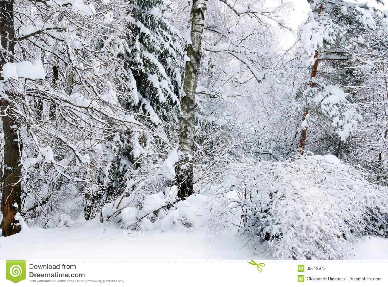 winter forest trees snow - photo #38