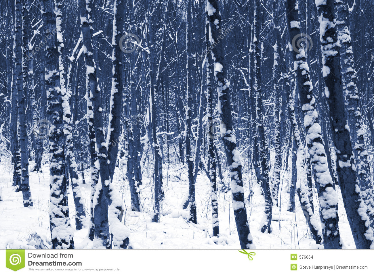 Birch trees in the winter stock photo image 2170700 - Winter Trees In Snow Stock Images