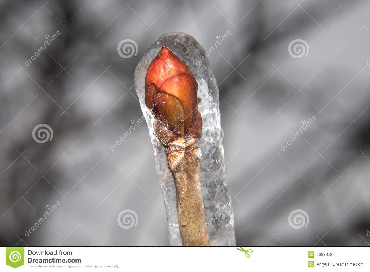 frozen buds on a - photo #16