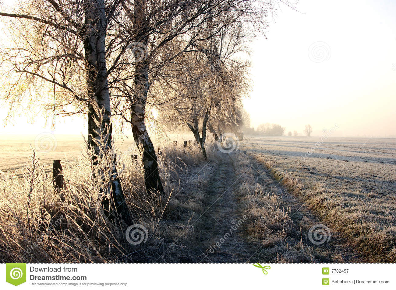 Winter walk royalty free stock photography image 7702457