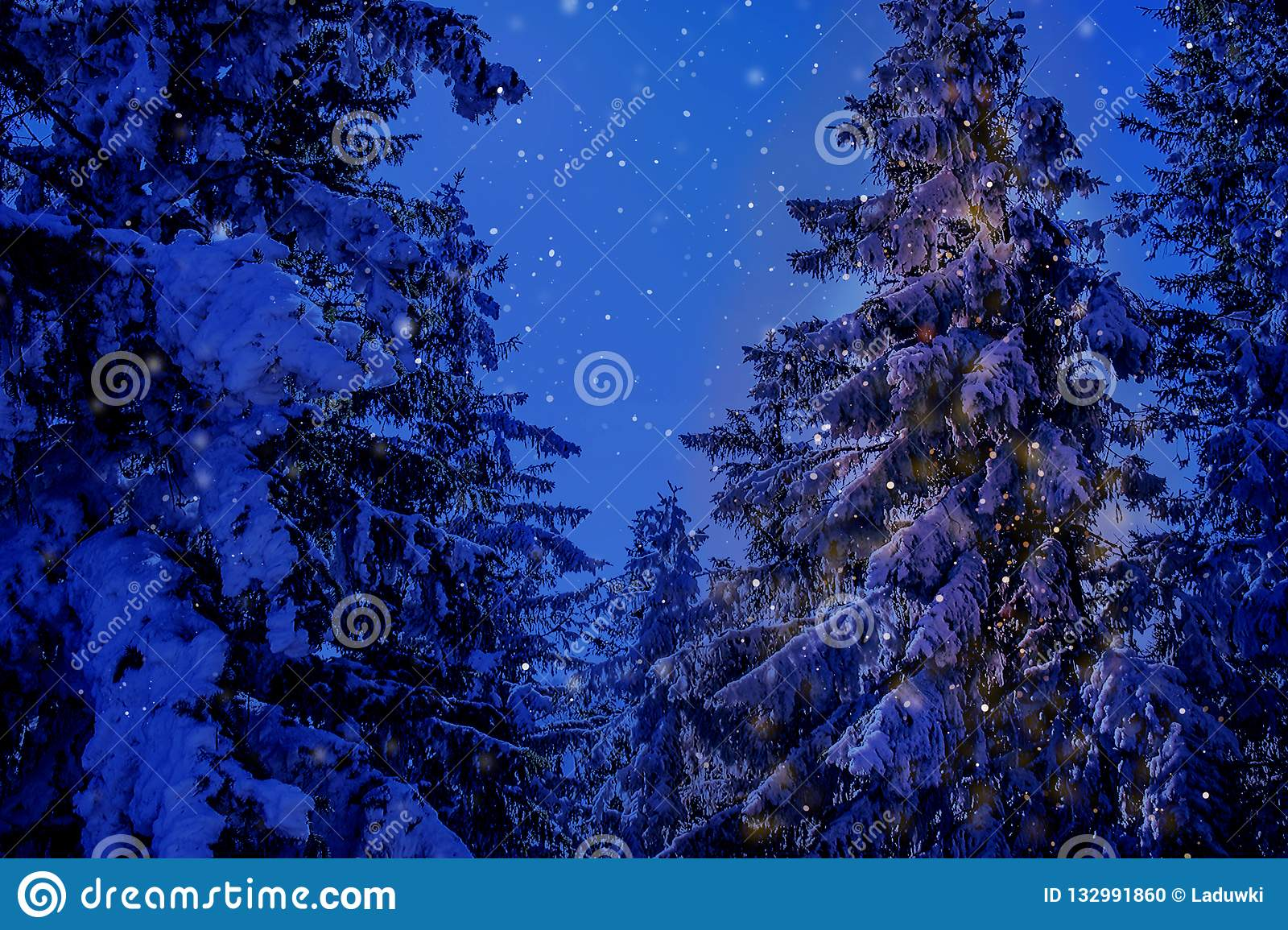 Winter wonderland christmas mountain scenery with centuries-old spruce and pine in the austrian Alps in night magic light