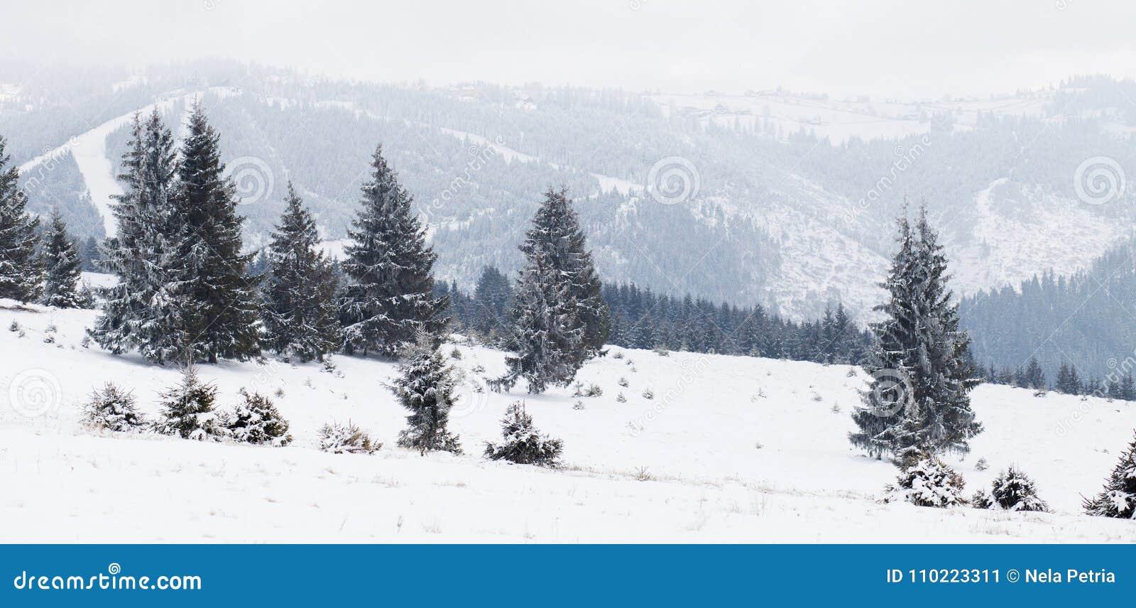 Winter Wonderland landscape, snowy fir tree background