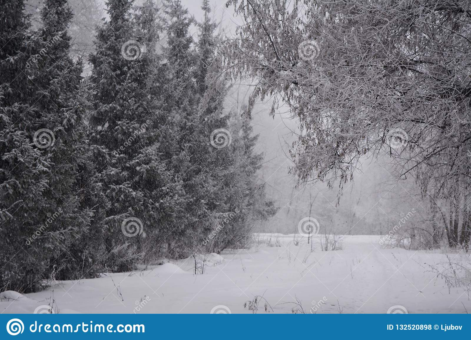 Winter wonderland in a mixed forest. Snowfall in cloudy day.