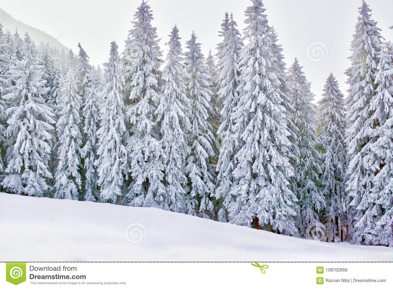 Winter wonderland with snowy trees and mountains