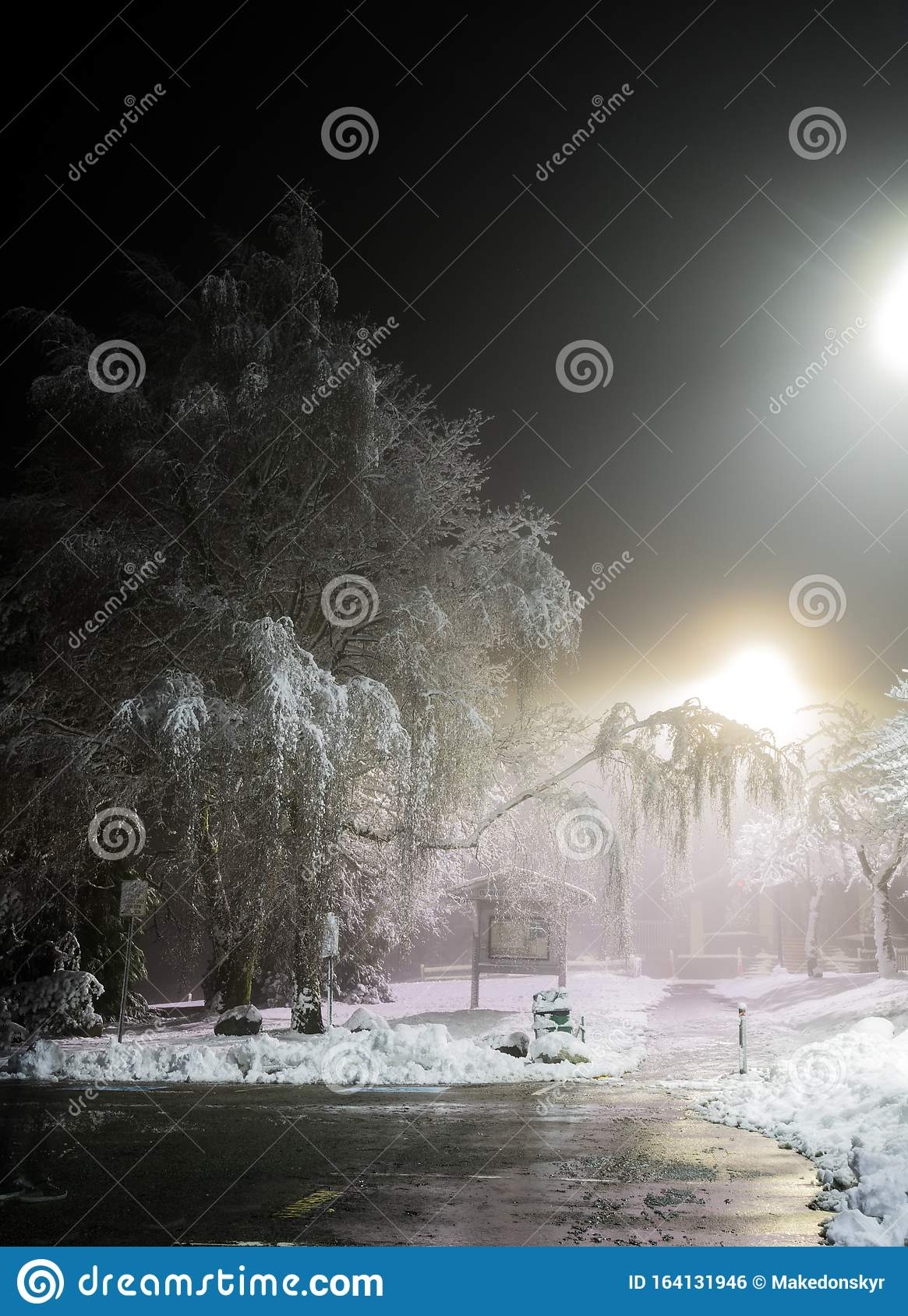 Winter Wonderland Trees Covered In Snow Night City Lights Shining Through Ideal Picture That Brings Up Holiday Spirit Stock Photo Image Of January Fairytale 164131946