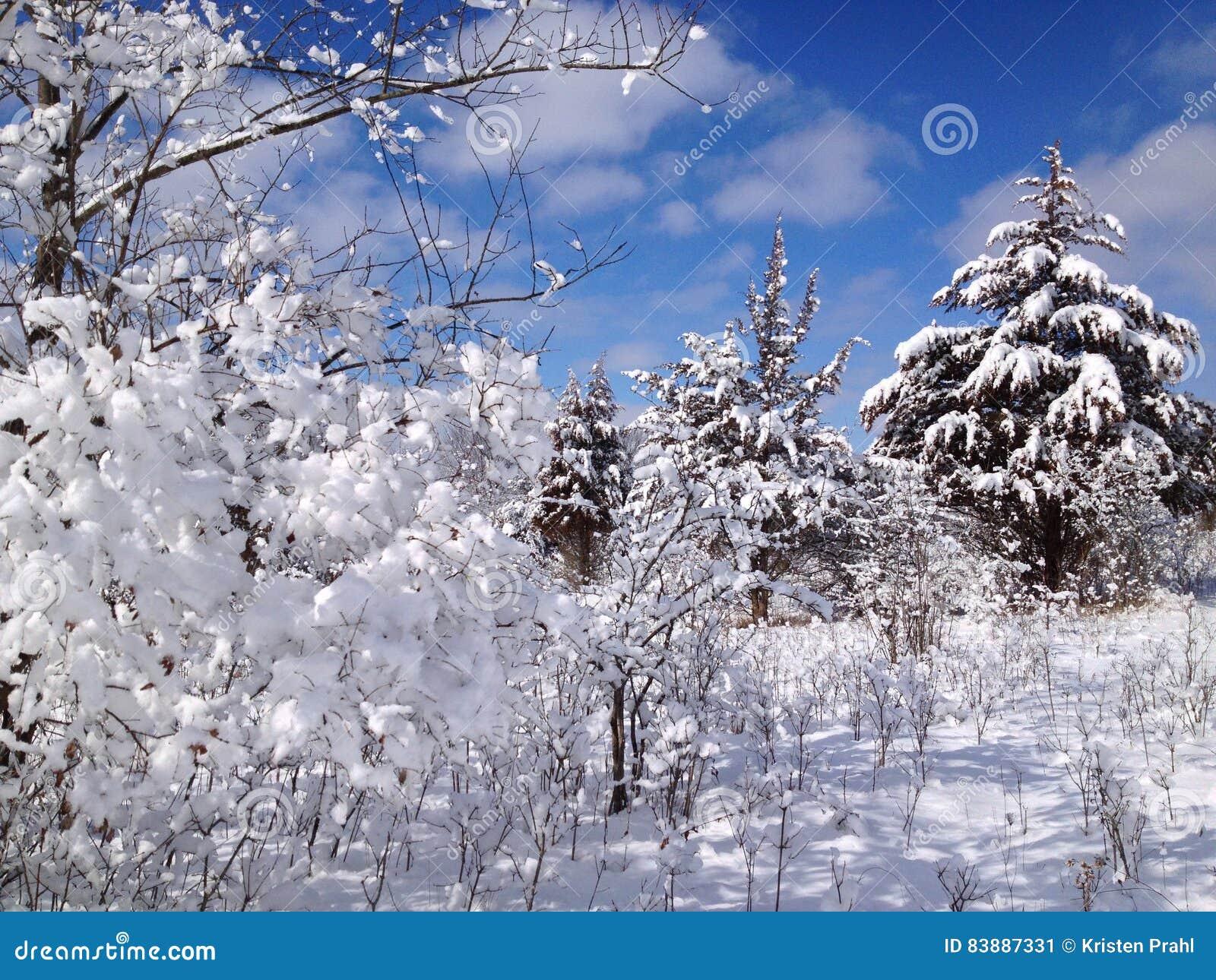 Winter wonderland in woods after heavy fresh snowfall