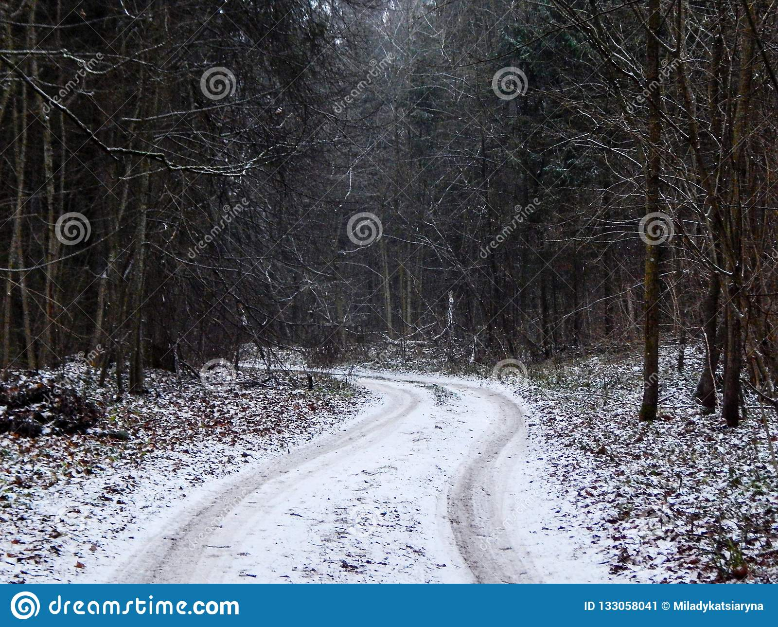 Winteransicht in den Wald