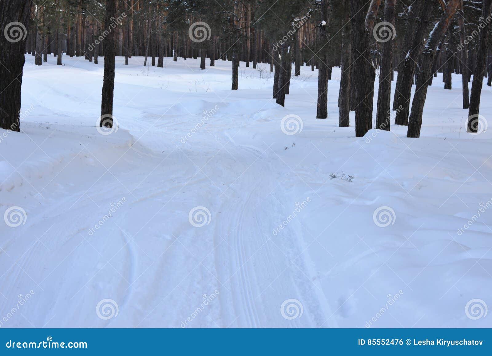 Winterbaumkiefer