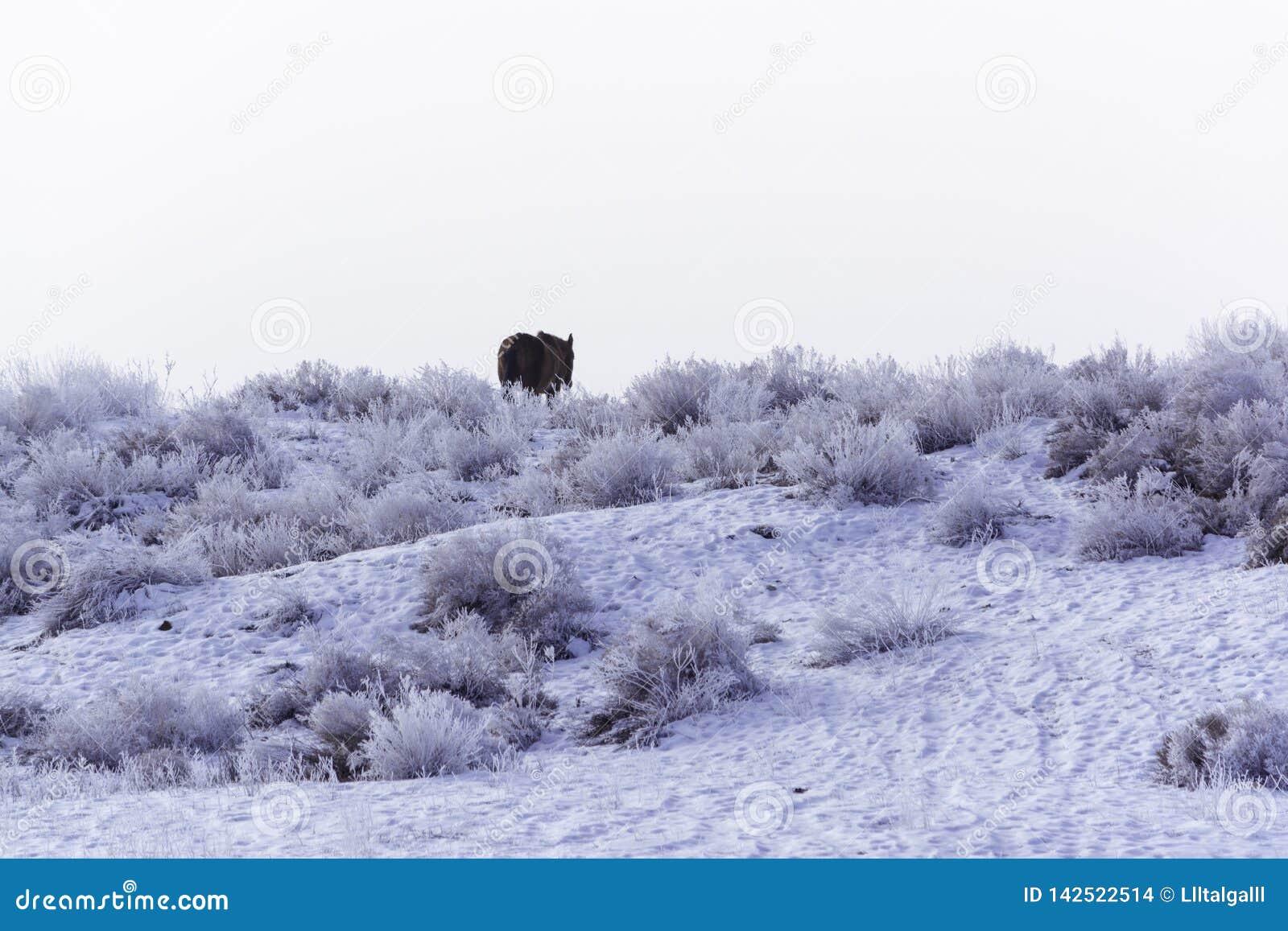 Wintering Pferd, das allein weiden lässt Wüstengebiet bei Balkhash Winterlandschaft nahe dem See Balkhash
