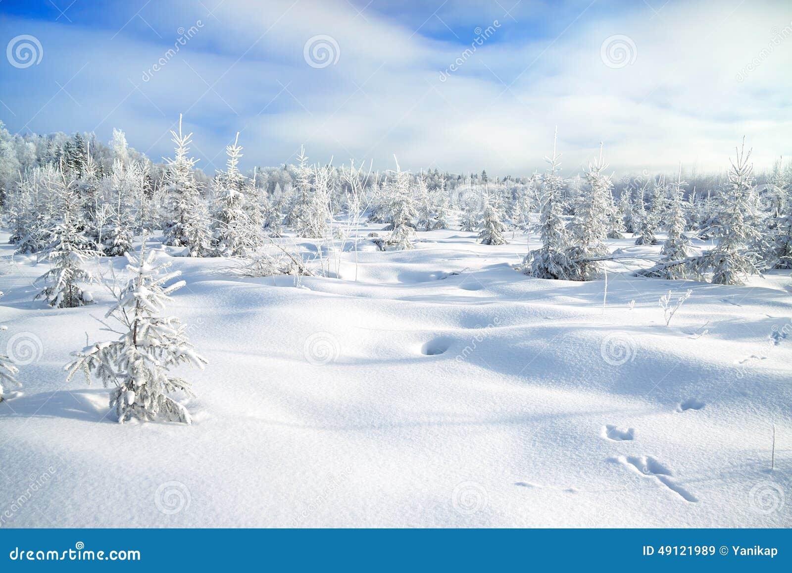 winterlandschaft mit dem wald und den spuren eines hasen auf schnee stockbild bild 49121989. Black Bedroom Furniture Sets. Home Design Ideas