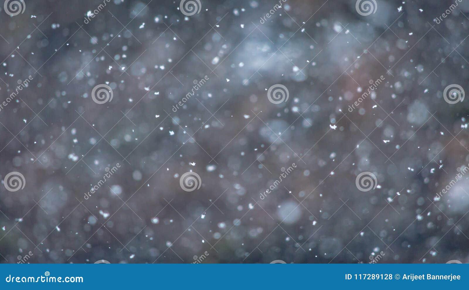 Winterscape med naturlig snöfallbakgrund för vintertema